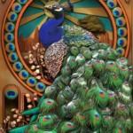 126 Peacocks-Art Nouveau 三浦信子